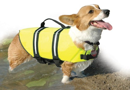 dog flotation devices